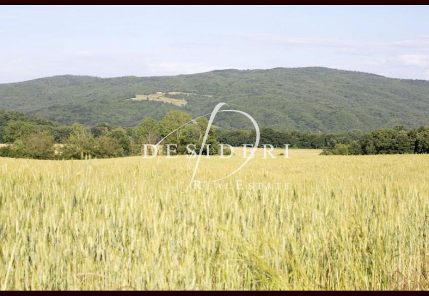 FARM on SALE in CIVITELLA PAGANICO - FERRAIOLA
