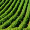 AZIENDA AGRICOLA in VENDITA a GAVORRANO - GENERICA