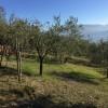 TERRENO AGRICOLO in VENDITA a PONTASSIEVE - MONTEBONELLO