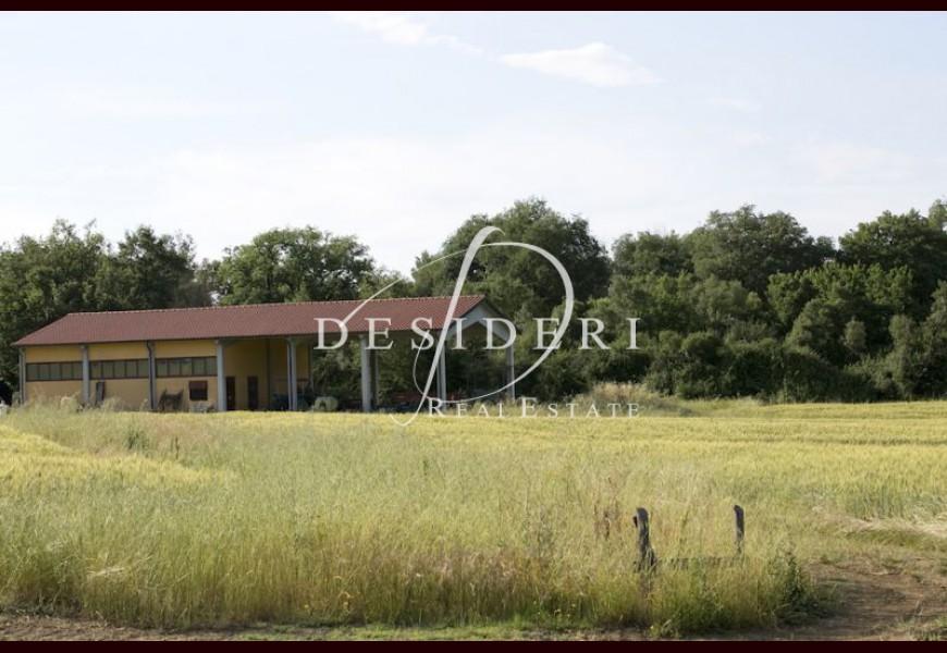 ферма - Продажа - CIVITELLA PAGANICO - FERRAIOLA