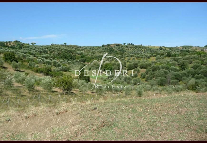 сельскохозяйственных земель - Продажа - ARCIDOSSO - LE MACCHIE